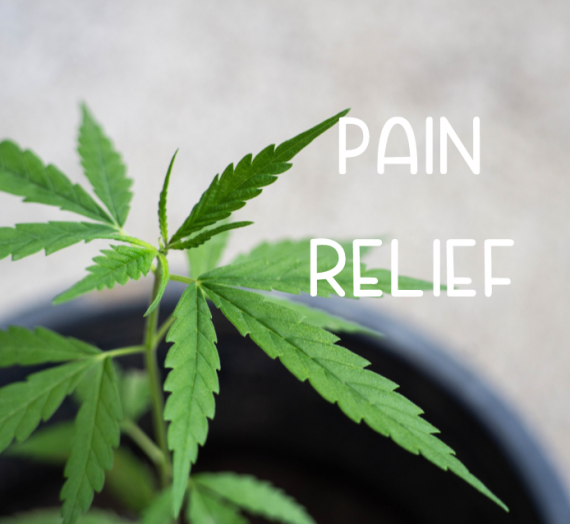 Pain Relief 2020 CBD Product Guide