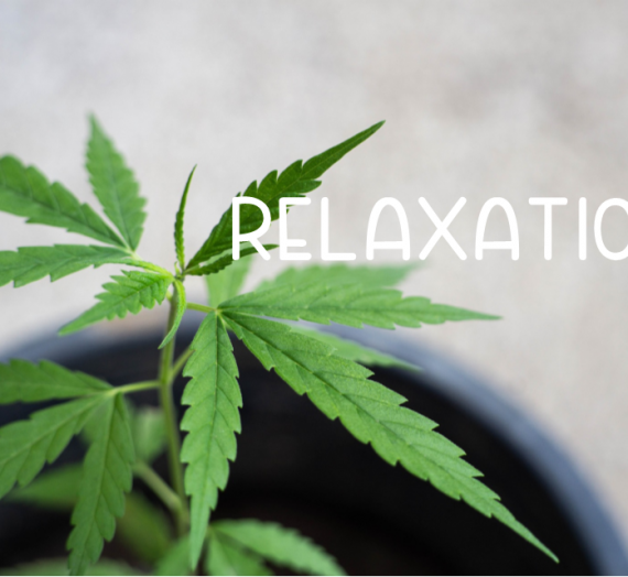 Relaxation 2020 CBD Product Guide