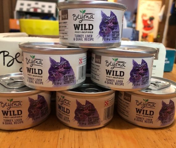 Purina Beyond Wild Prey-Inspired Turkey, Liver & Quail Recipe #ChewyInfluencer