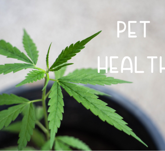 Pet Health 2020 CBD Product Guide